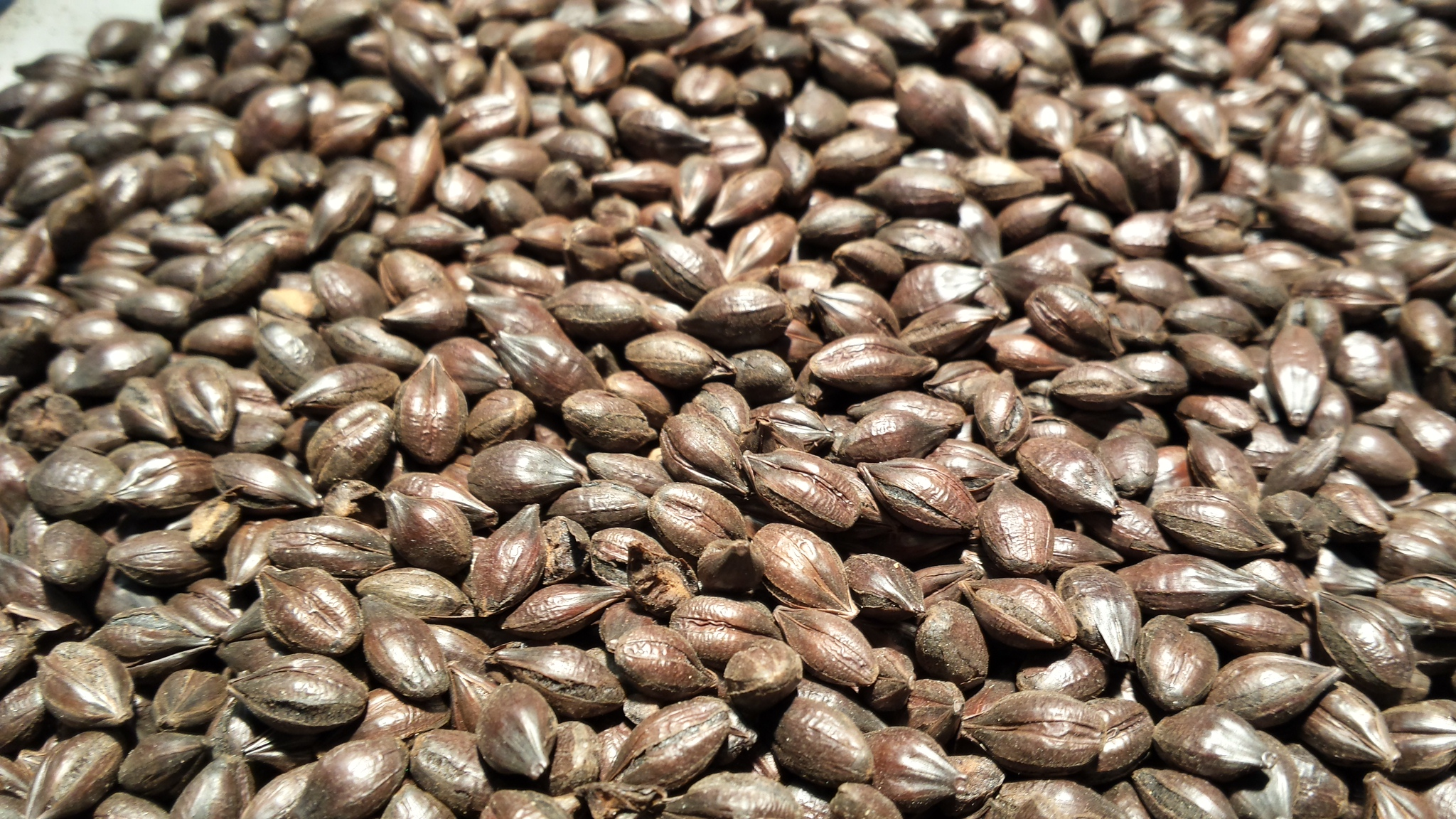 1KG Gladfields Roasted Barley
